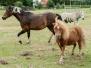 Familienausflug nach Stade: Von Pferden lernen – Infoseminar für Erwachsene, Pony-Kuscheln und Reitpädagogik für Kinder