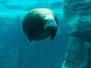 Hagenbeck Eismeer: Exklusiv geführte Tour zu Eisbär, Walross & Pinguin
